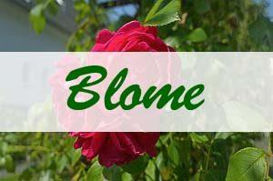Artikelgrafik: Blome